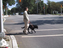 Figure 2-5. Pedestrian with dog guide